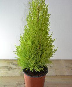 Combinatie met buitenplanten