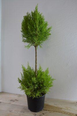 Buitenplanten